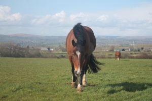 Ben the horse chilling at grass