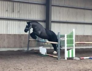 Horse Loose Jumping