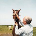 Horse having suncream applied