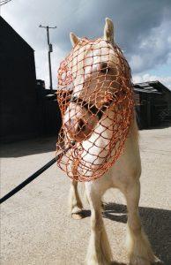 Horses head in haynet