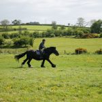 Horse Johnny cantering in field