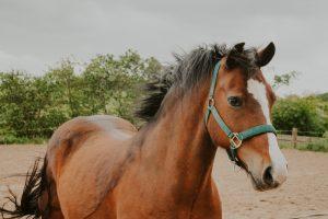 Windswept horse