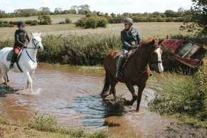Horses riding through water