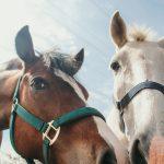 Hello horses