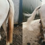 Before and after tail