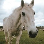 Roly the Pony