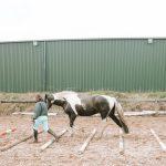 Horse walking over poles