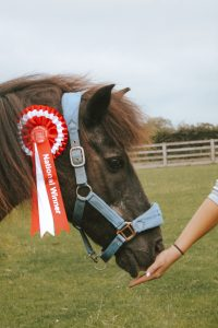 Pony with rosette
