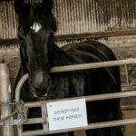 Do not feed the horses